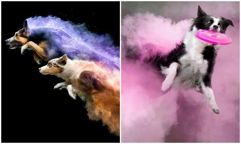 Вылитые супергерои: собаки в порошковых красках (15фото)