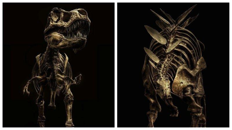 Мечта палеонтолога: замечательные фотографии скелетов динозавров (9фото)