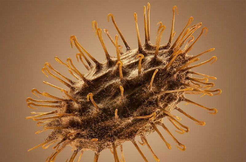 Колючие путешественники: семена под микроскопом (10фото)
