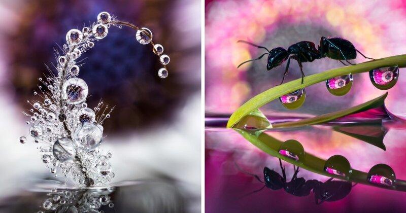 Как в капле воды: чудеса макрофотографии (15фото)