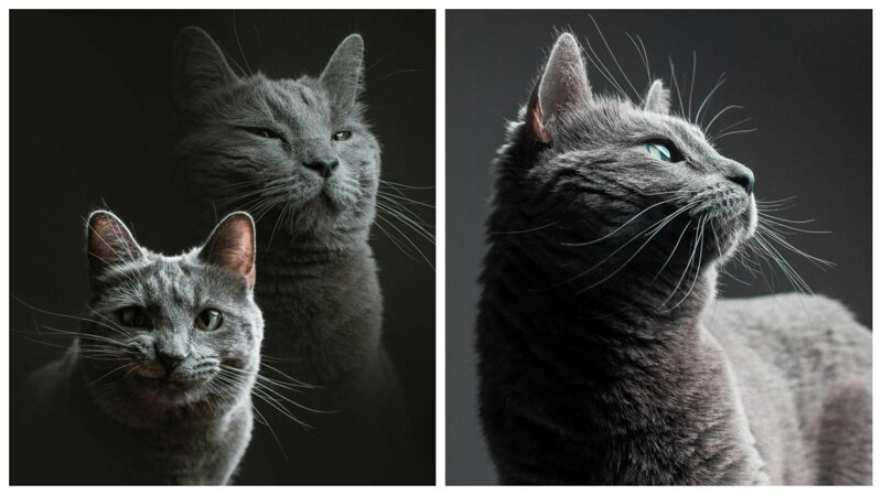 Вот что происходит, когда фотограф присматривает за вашей кошкой (12фото)