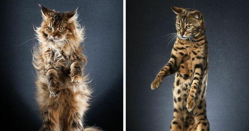 20 современных Котов в сапогах (21фото)