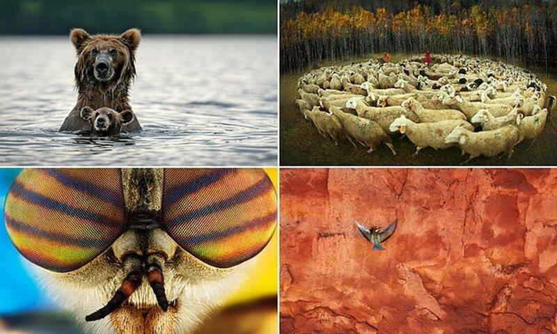 Потрясающие снимки с фотоконкурса Cewe Photo Award (17фото)