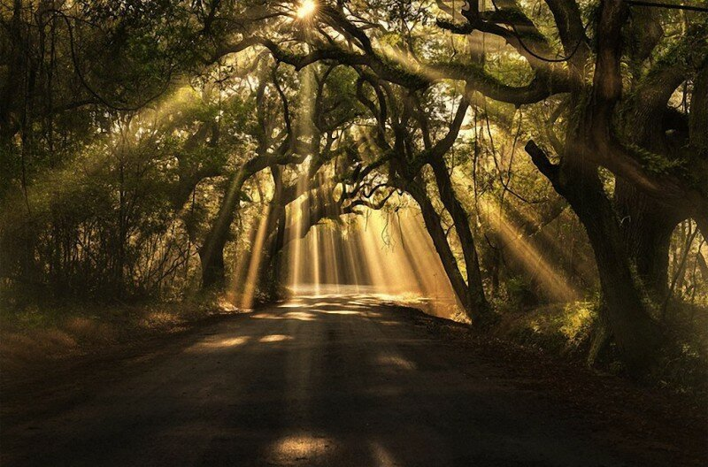 Самые красивые деревья в мире (19фото)