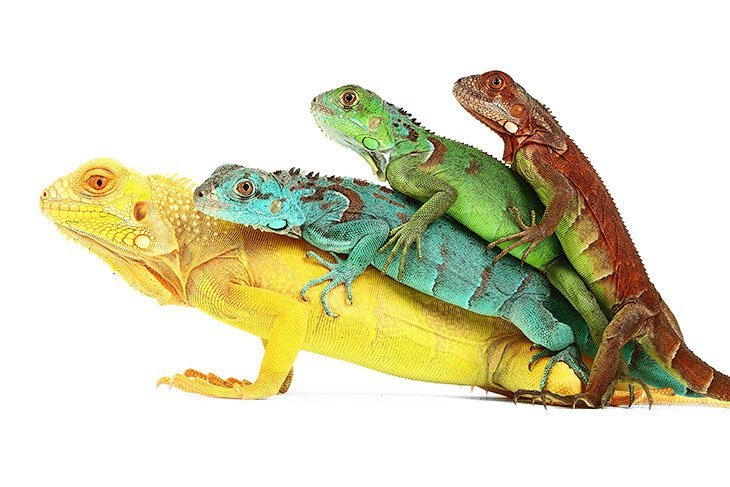 Рептилии: жизнь на белом (18фото)