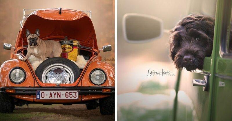 Фотограф из Бельгии снимает собак и винтажные автомобили. Получается очень органично! (29фото)