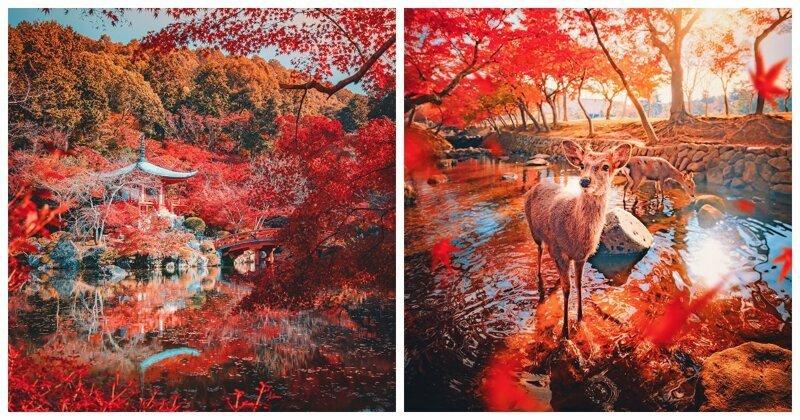 Киото и Нара в осенних красках (9фото)