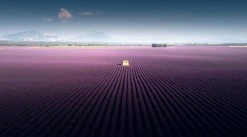 Захватывающие дух фотографии лавандового поля, снятые на юге Франции (13фото+1видео)