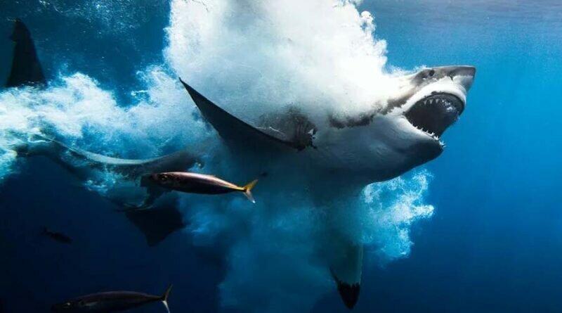 Потрясающие снимки-победители и призёры фотоконкурса «Through Your Lens» (13фото)