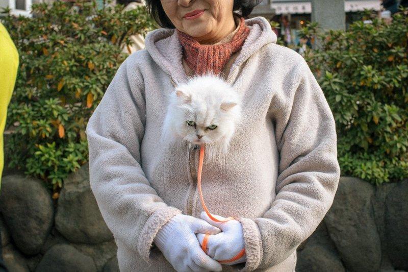 Причудливые и экстраординарные уличные фото японского фотографа Шина Ногучи (24фото)