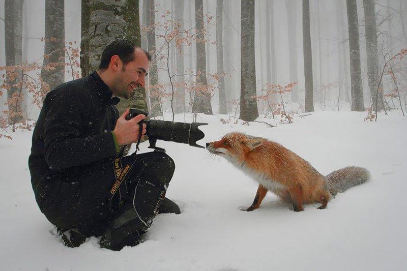 Фотограф дикой природы - это лучшая работа в мире! (26фото)