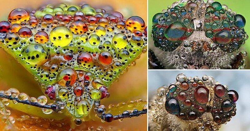 Жизнь насекомых: удивительные макрофотографии Александра Метта (9фото)