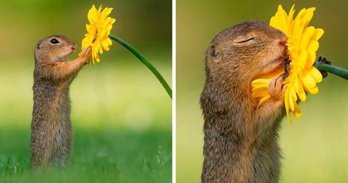 Фотограф раскрывает тайную красоту природы (31фото)