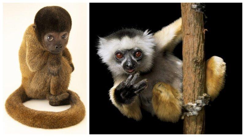 Исчезновение Ковчега: самые уязвимые виды в октябрьском выпуске National Geographic (10фото)