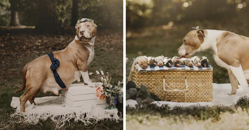Фотосессия для мамы-питбуля: трогательнее не бывает! (8фото)