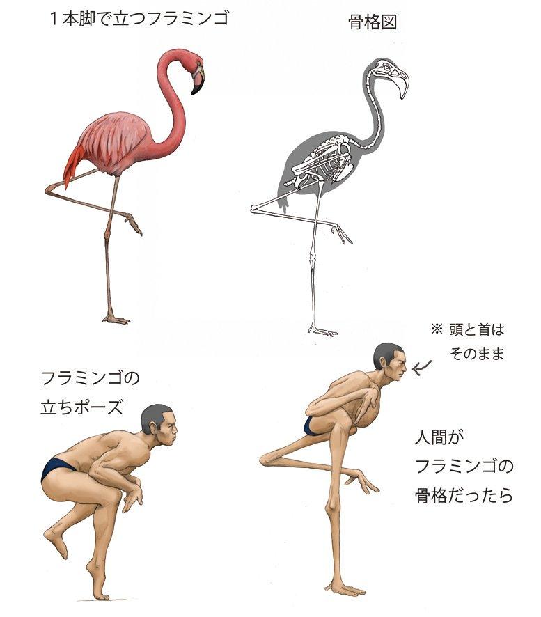 Фантазия японского художника: что было бы, если человек будет похож на животное? (16 фото)