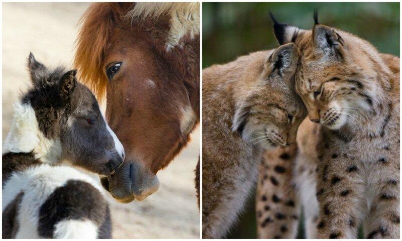 30 трогательных фотографий о том, как умеют любить животные (31фото)