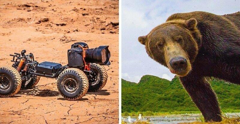 Фотограф прикрепил камеру к машинке с ДУ и снимает смешную реакцию диких зверей (19фото)