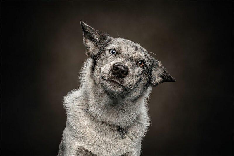 Портреты животных, на которых они выглядят очень по-человечески (21фото)
