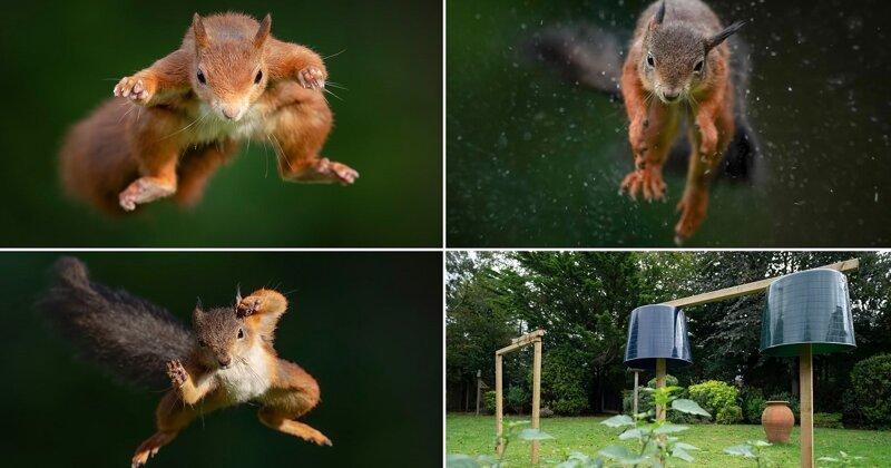 Фотограф-натуралист год заманивал белок в свой сад, чтобы сделать эффектные снимки (7фото)