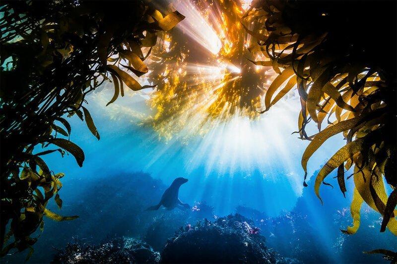 Победители фотоконкурса The Nature Conservancy - 2019 (18фото)