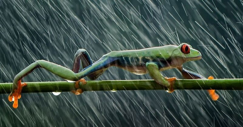 20 ярких фотографий с конкурса, на котором участники показали невероятную красоту и могущество воды (21фото)