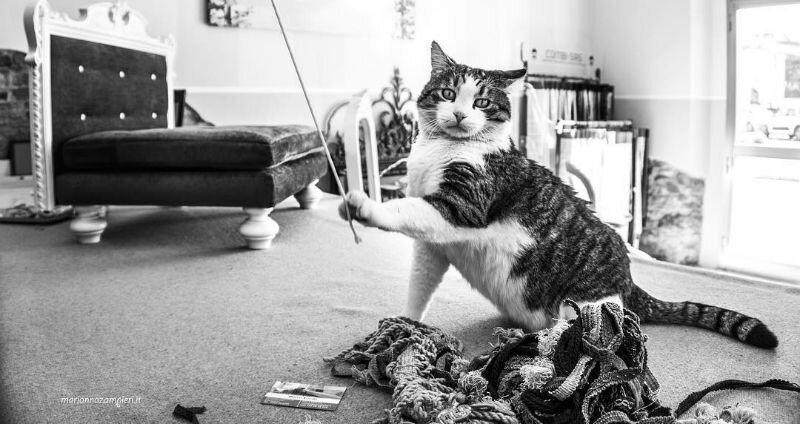 Великолепные фотографии кошек, сделанные Марианной Зампиери (45фото)
