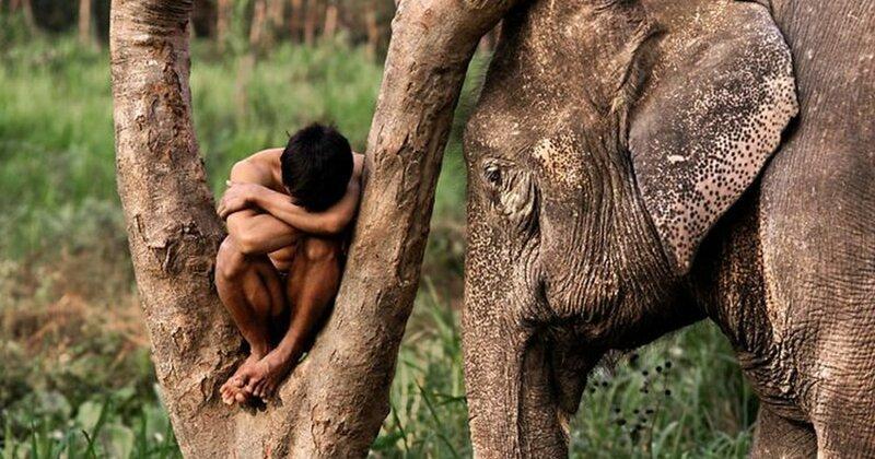 Люди и животные: 50 потрясающих фотографий Стива МакКарри (51фото)