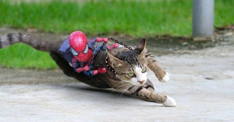 Художник придумывает смешные приключения Человека-паука в стране кошек (30фото)