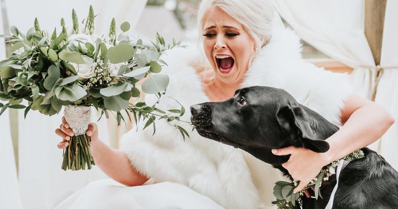 Свадебные фото с собакой произвели фурор в интернете! (14фото)