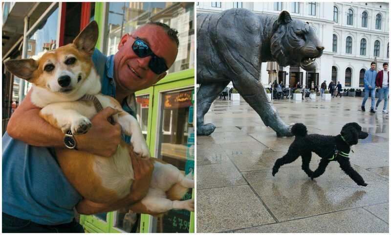 Наши лучшие друзья: 30 забавных снимков собак, сделанных в нужный момент (31фото)