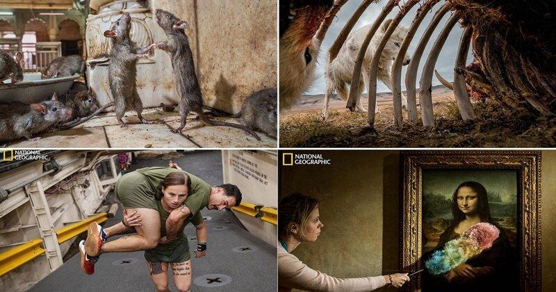 Лучшие фотографии 2019 года по версии National Geographic (13фото)