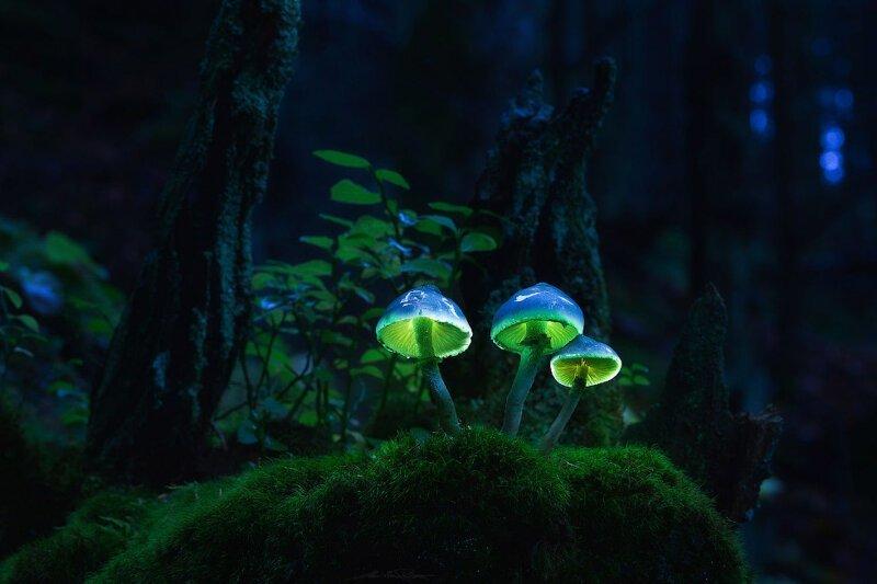 Сказочные грибы (18фото)