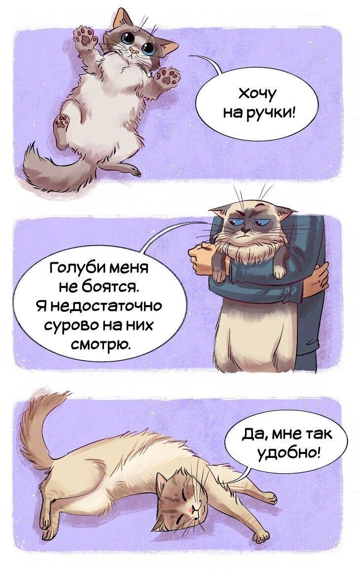 Гайд по кошкам (16фото)