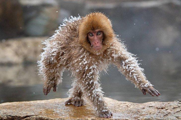 Необычный конкурс Comedy Wildlife Photography Awards 2019 (17фото)