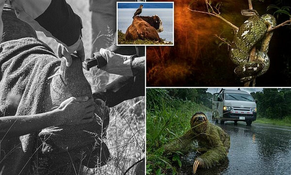 Победители конкурса фотографии Британского экологического общества - 2019 (16фото)