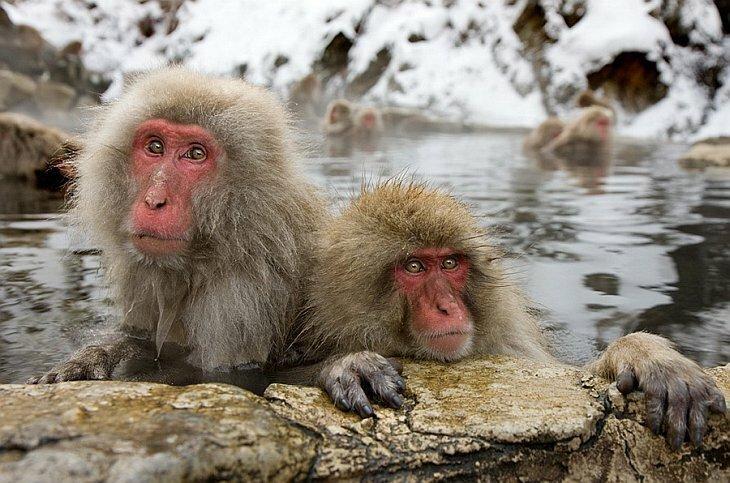 Парк обезьян в «Адской долине» (20фото)