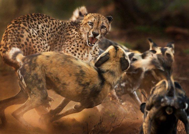Конкурс фотографии дикой природы Wildlife Photographer of the Year 2019 (15фото)