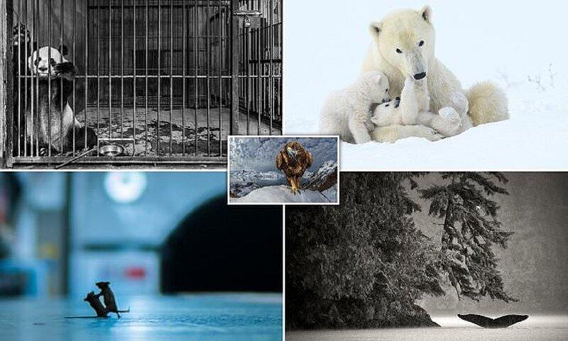 Публика выбрала лучших фотографов дикой природы (26фото)