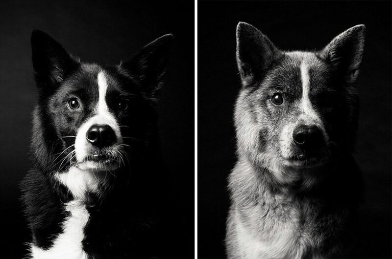 За время пути собака могла подрасти! (14фото)