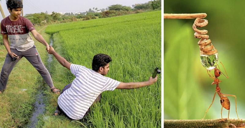 Индийский фотограф делает впечатляющие макроснимки насекомых с помощью смартфона (33фото)