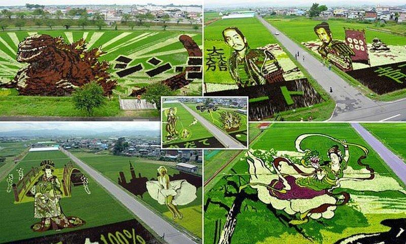 Потрясающие рисовые поля Инакадате (8фото)