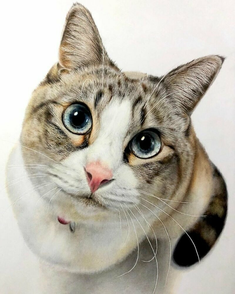 23 рисунка кошек в жанре гиперреализма (23фото)