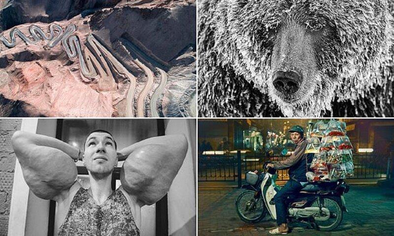 Жюри Sony World Photography Award выбрало лучшие снимки для финального голосования (16фото)