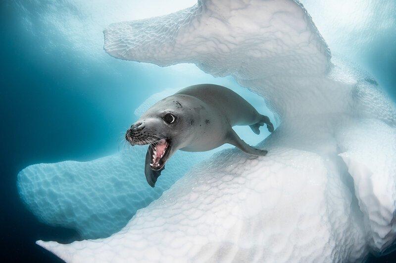Выбраны лучшие подводные фото года (24фото)