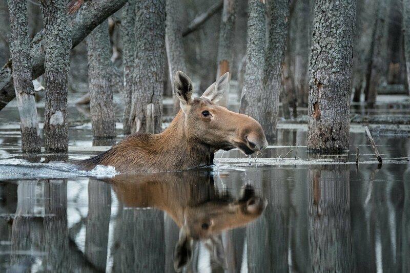 «Дикой природы России» - фотоконкурс (25фото)