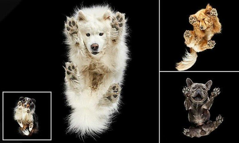 Забавные фотографии собак с неожиданного ракурса (14фото)