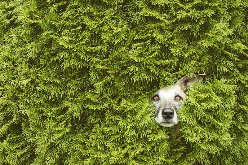 Эмоциональные портреты собак от профессионального фотографа (15фото)