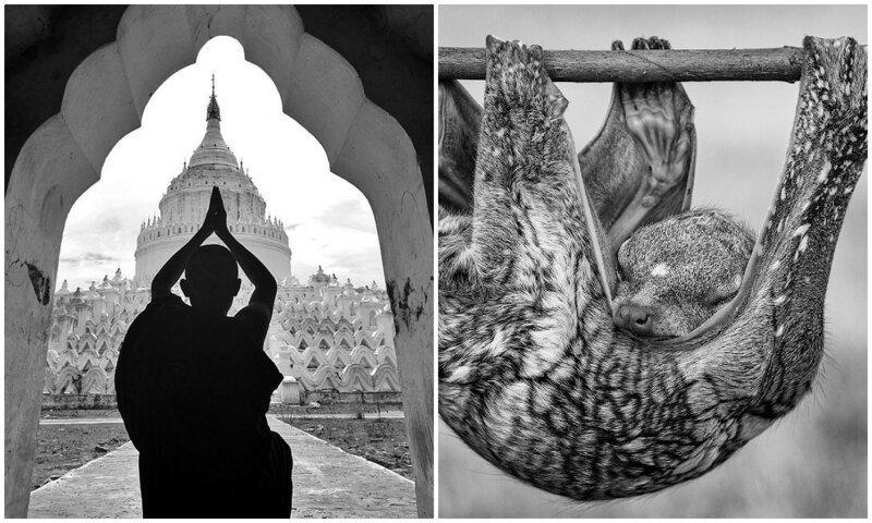 Топ-10: невероятные черно-белые снимки с конкурса Agora (11фото)