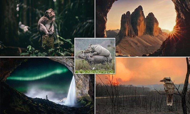 Лучшие снимки Sony World Photography Award (20фото)